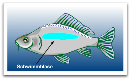 Schwimmen_2 on Im